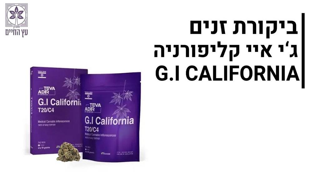 סקירת זנים ג'י איי קליפורניה (GI California)