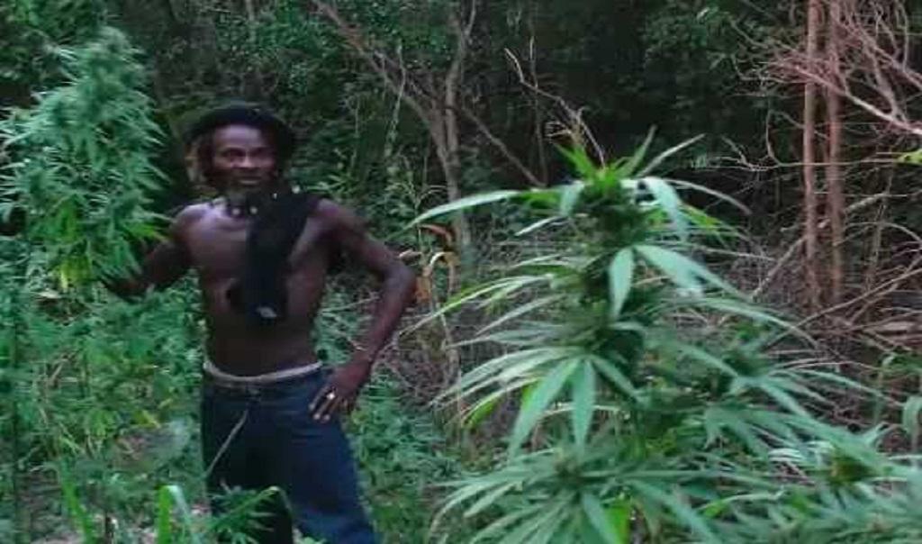 סיור בג'ונגל של ג'מייקה ושדה קנאביס