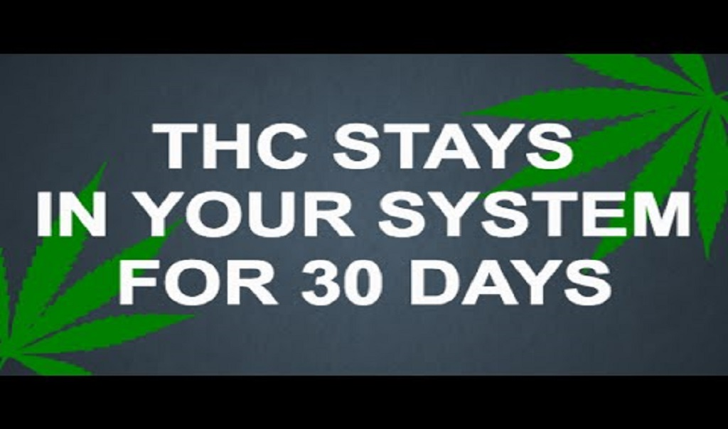 THC נשאר במערכות הגוף